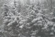 Schnee 2009-3.jpg