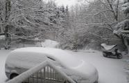 Schnee 2009-1.jpg
