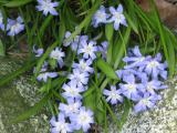Die ersten Frühlingsblumen 003.jpg