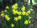 Die ersten Frühlingsblumen 007.jpg