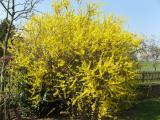Die ersten Frühlingsblumen 005.jpg