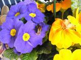 Frühling 2009 002.JPG