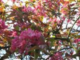 Die ersten Frühlingsblumen 015.jpg