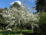 Die ersten Frühlingsblumen 029.jpg