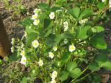 Die ersten Frühlingsblumen 080.jpg