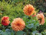 Gartenfotos 045.jpg