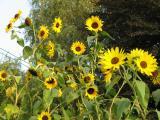 Gartenfotos 038.jpg