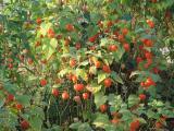 Gartenfotos 010.jpg