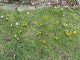 Frühling097.jpg