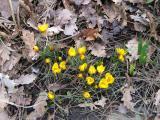Frühling 099.jpg