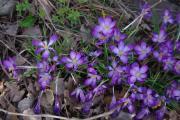 Frühling 136.jpg