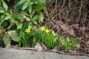 Frühling130.jpg