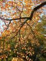 Baum3.jpg