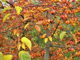 Hagnau-Wanderung Nov 2012 028.JPG