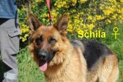 Schila2.jpg