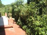 bambus1.jpg