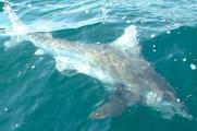 wayne-shark-001.jpg