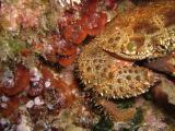 Hvar Unterwasserbilder 134.jpg