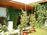 Kopie von Garten.jpg