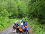 48 mittem im Wald.JPG