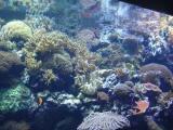 korallenbecken.jpg