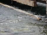 Kopie von Korcula 2010 109.jpg