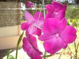 Blumen 003.JPG