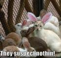 yaygurl-albums-cats-cute-also-picture111023-funny-pictures-cat-disguised-rabbit.jpg