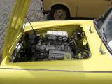 31. Gelbe Zicke 2.jpg