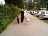 emma und lucky gehen miteinenader spazieren.... (4).jpg