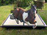 pferd 1.jpg