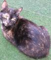 Floeckchen - Katze 1.png