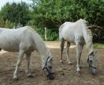 pferde2.jpg