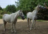 pferde3.jpg