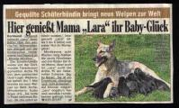 Bildzeitung.jpg
