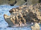 Kreta 2007 119.jpg