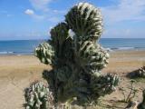 Kreta 2007 213.jpg