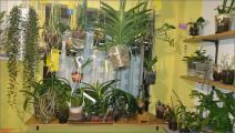 Orchideenfenster (129) (Groß)_2.jpeg