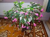 Kaktus (5).JPG