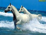 horses17a.jpg