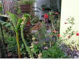 Rot im Garten2.jpg