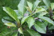 Maggys Pflanze.jpg