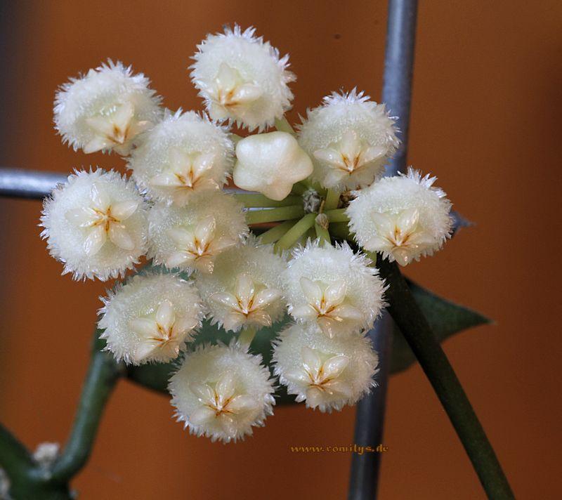 Blüten 2014 - Seite 23 F22t3892p46794n2_MIFOpfbe