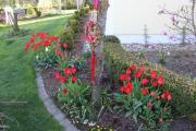 Eingang zum Garten.jpg