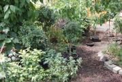 Garten vorm Haus.jpg