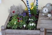 Frühjahrsbepflanzung 2.jpg
