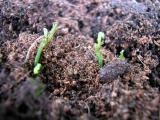 Gartenpflanze 009.jpg