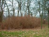 Pflanzen 2011 164.jpg