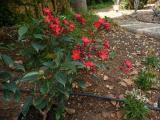 neue Blume.jpg