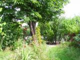 Garten6.JPG